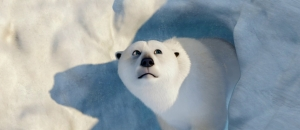 melting arctic
